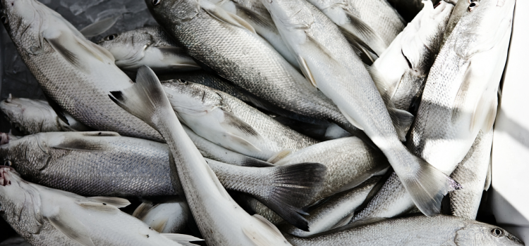 Featured Fish Pescatorian Diet